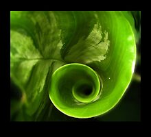 Spiral Leaf by 4Flexiway