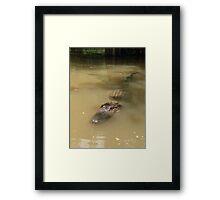 Swamp Gator Framed Print