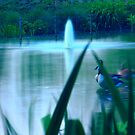 Mystical Pond by Arvind Singh