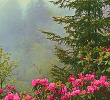 RHODODENDRON ON THE BLUE RIDGE PARKWAY by Chuck Wickham