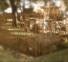 Gravestone. St Peters N.S.W. by VenturAShot