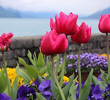 Flowers on the lake by Michelle Neeling