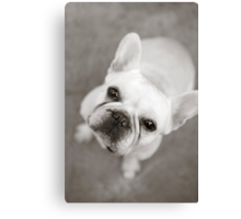 CREAMY FRENCH BULLDOG Canvas Print
