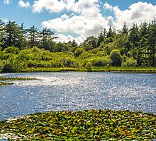Summer Lake by Nick Jenkins