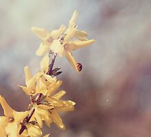 Ladybug on Yellow Forsythia by laughlovephoto