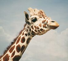 Giraffe by laughlovephoto