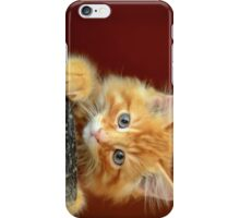 Ginger Kitten iPhone Case/Skin