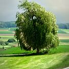 the willow near Silheim by NafetsNuarb