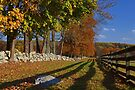 Fall at Springton Manor by cclaude