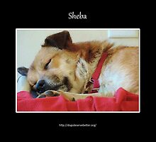 Sheba Sleeps by Lydia Marano