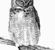 Sketch of Barn Owl by Lolabella