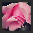 Curly Pink Rose  by Zoe Harris