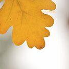Autumn Hand by Zoe Harris