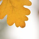 Autumn Hand without label by Zoe Harris