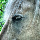 Eye of the Pegasus by Skye Ryan-Evans
