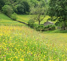 Dales barn and flower meadow by Judi Lion