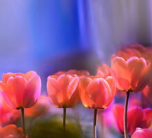 Tulips by Oleg Serkiz