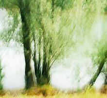 Artscape...........Willow Tree on the Rhine by Imi Koetz