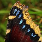 Mourning Cloak wing by Kane Slater