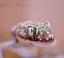 Elegant gecko is watching you! by AderynValentine