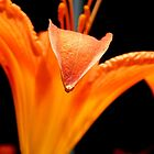 Orange Lily    ^ by ctheworld