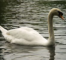 Swan in the Lake by ValeriesGallery