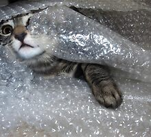 Mikino bubble-wrapped by Jaeda DeWalt