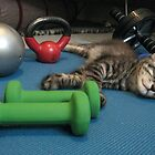 Mikino doesn't workout on Caturday's!  by Jaeda DeWalt