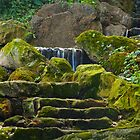 Mossy Steps by Barbara  Brown