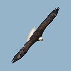 Eagle on the Turn by Skye Ryan-Evans