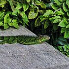 Lizard in the Green on Cement by GolemAura