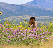 Foal and Flowers - 2 by Kelly Jay