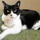 The Tomcat by Nicole Zeug