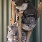 Proud Family - Featherdale Wildlife Park by Andrew Dodds