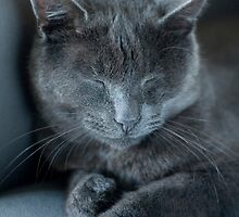 Sleepy Cat by davidlichtneker