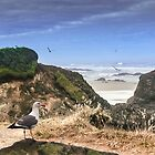Depot Bay on the Oregon Coast by Diane Schuster