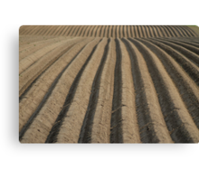 Field of Furrows Canvas Print