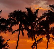 Sunset Palm Trees 1 by Leigh Anne Meeks