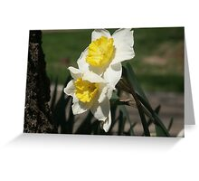 Daffodil Spring Greeting Card
