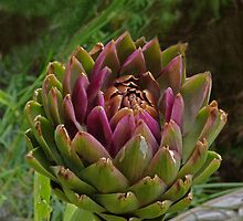 Artichoke and wildlife by Sandra Caven