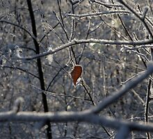 Sole leaf in bare snow-covered trees by Clayton Suares