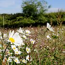 Summer's here :-) by dgscotland