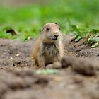 Prairie Puppy by rosaliemcm