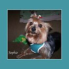 Sophie (3) by Lydia Marano