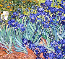 Vincent Van Gogh Irises by Fine Art Gallery