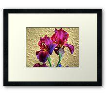 Brown Irises Framed Print