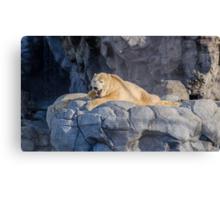 Sea World Polar Bear Hudson Canvas Print
