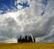Cypresses of Toscany by JBlaminsky