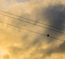 Out On a Wire by Jack Steel