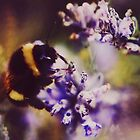 Bumblebee Macro by Indea Vanmerllin